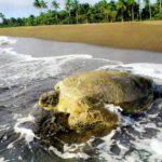 Costa Rica, tra i 1000 posti da vedere prima di morire