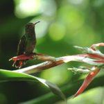Forum Greenaccord: il Modello Costa Rica