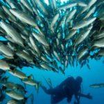 Immersioni sub in Costa Rica