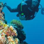 Immersioni subacquee nel Guanacaste