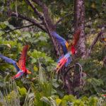 Parco Nazionale Corcovado, il luogo biologicamente più ricco del pianeta