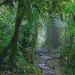 Riserva biologica di Monteverde, tipica foresta nebulare