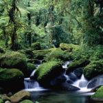 Braulio Carrillo, il parco nazionale più esteso del Costa Rica