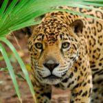 Stop alla caccia sportiva in Costa Rica