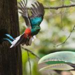 I cambiamenti climatici rendono rivali tucano e Quetzal