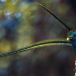 Le specie animali che meglio rappresentano il Costa Rica