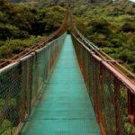 Accademia Kronos: un accordo per tutelare la foresta pluviale