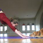 Doga: lo yoga da praticare con il nostro cane