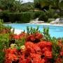 piscinafiori