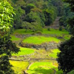 L'AREA ARCHEOLOGICA DI GUAYABO