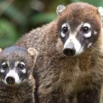 ANIMALI TIPICI DELLA COSTA RICA