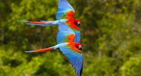 Parco Nazionale di Palo Verde